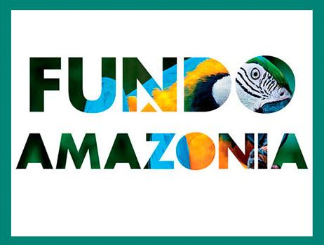 Fundo Amazônia: R$ 200 mi para recuperação da vegetação