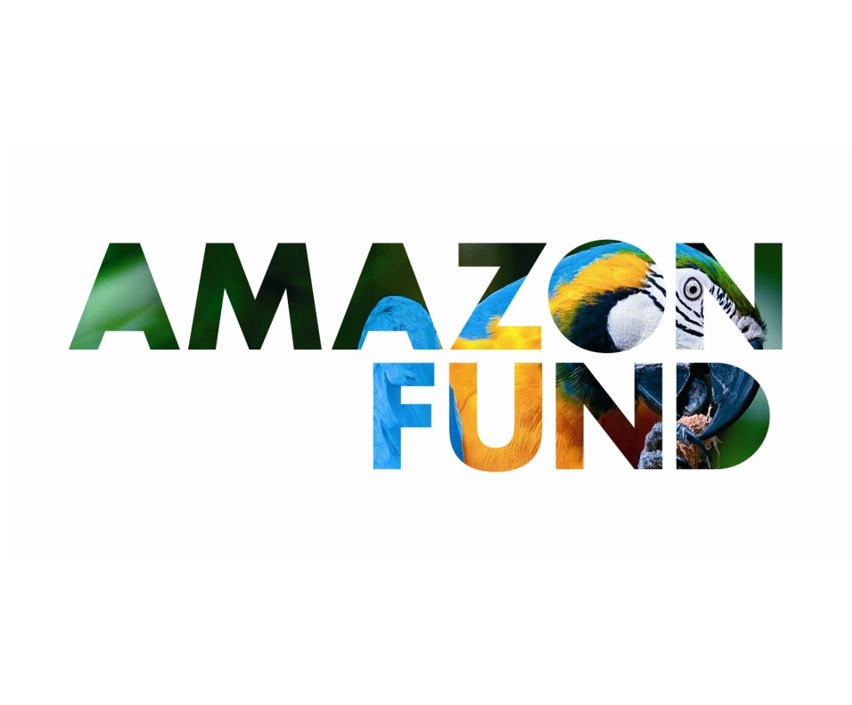 Amazon Fund: US$ 62,5 mi for vegetation recovery