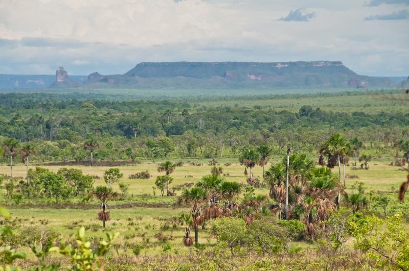 Brasil submete nível de referência para emissões do Cerrado